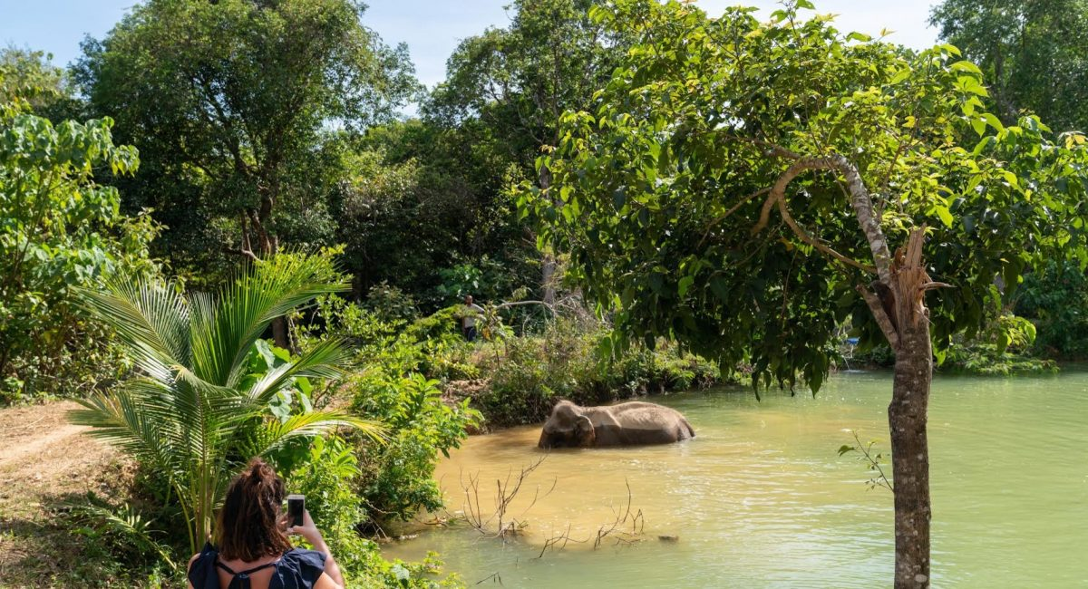 An elephant named Sow walks in the water while a tourist takes a photo from a safe distance.  Photo: Nick Axelrod.