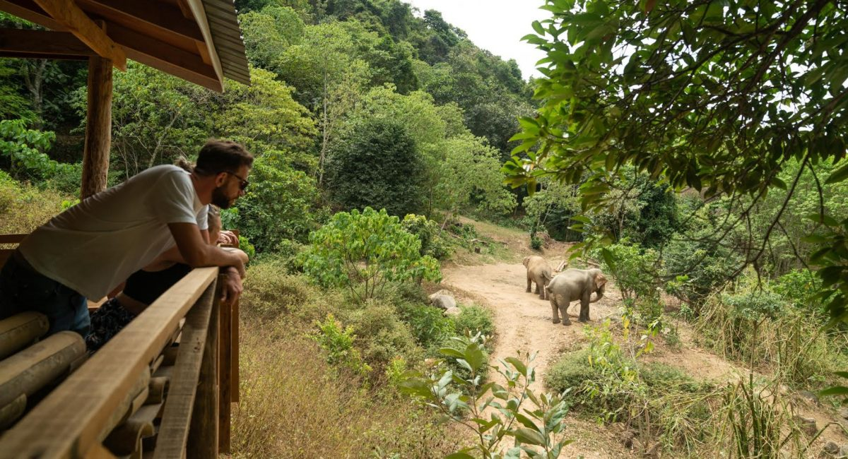 World Animal Protection has helped a second camp become truly elephant-friendly. Following Giants is a venue on the Thai island of Koh Lanta. The venue re-opened for high season at the start of December 2019, after moving from a site that offers rides and hugs with elephants, to an observation-only model. Photo courtesy: World Animal Protection/Nick Axelrod